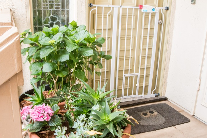 Balcony Gardening-10
