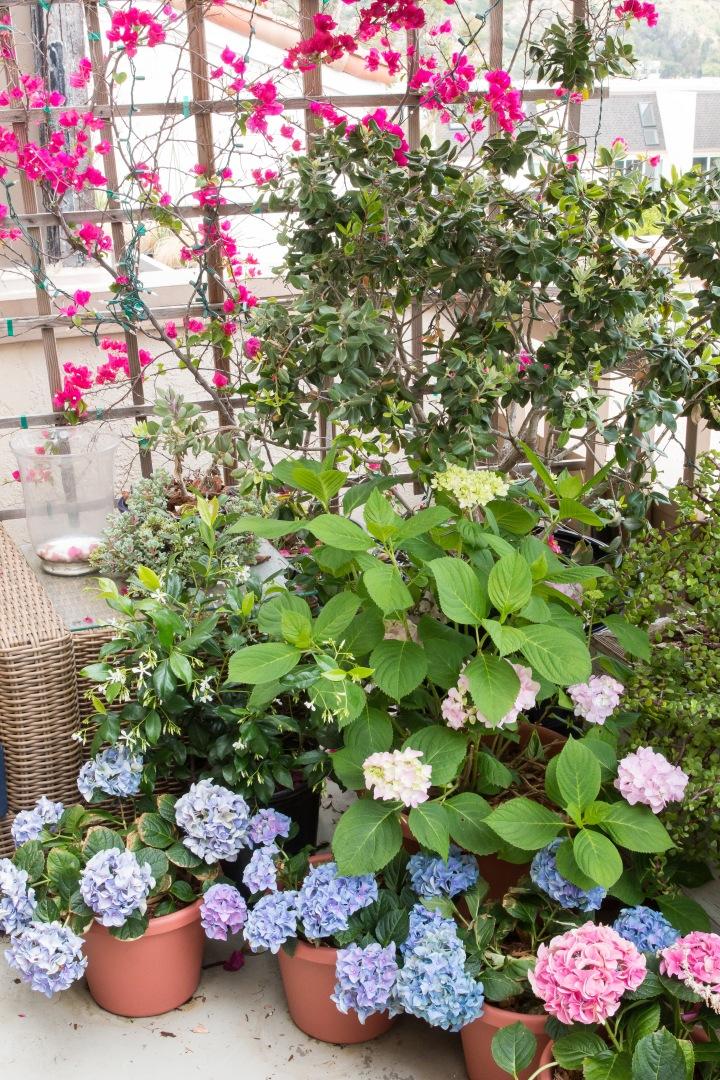 Balcony Gardening-16