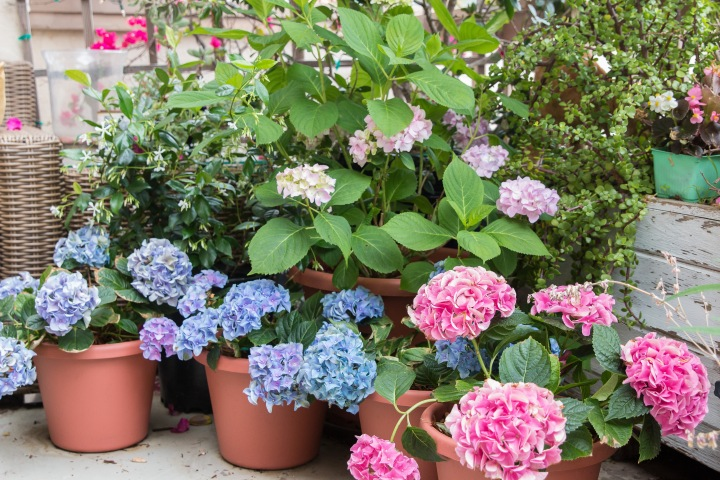 Balcony Gardening-17