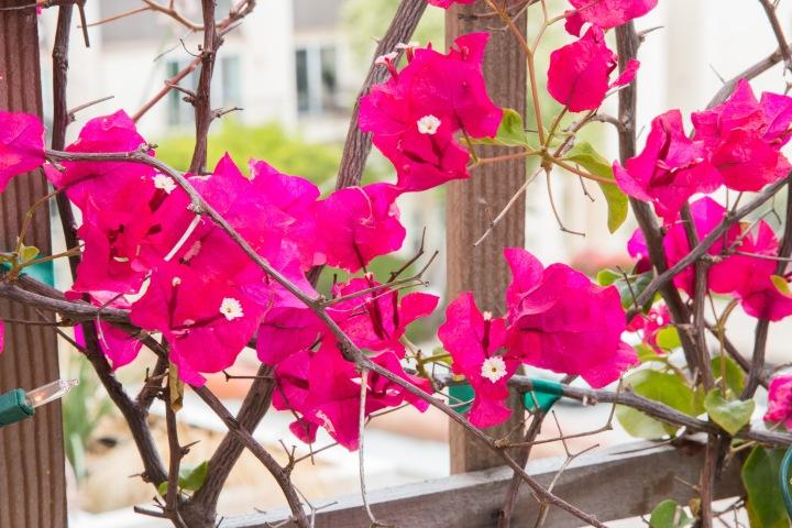 Balcony Gardening-22