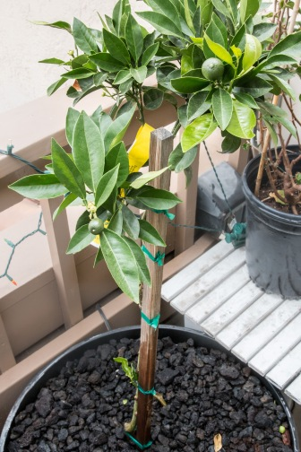 Balcony Gardening-8